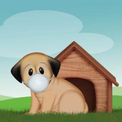Il cane e la quarantena